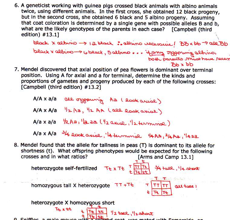 Multiple Allele Worksheet Free Worksheets Library – Genetics Practice Problems Worksheet Answer Key